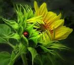 Happy Ladybug Hugs.....