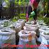 Fungsi Penting Air Bagi Tanaman