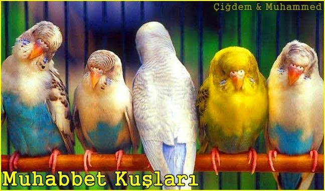 Muhabbet Kuşları Hakkında Her Şey
