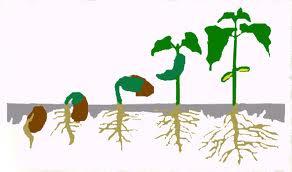 Πώς μεγαλώνουν τα φυτά!