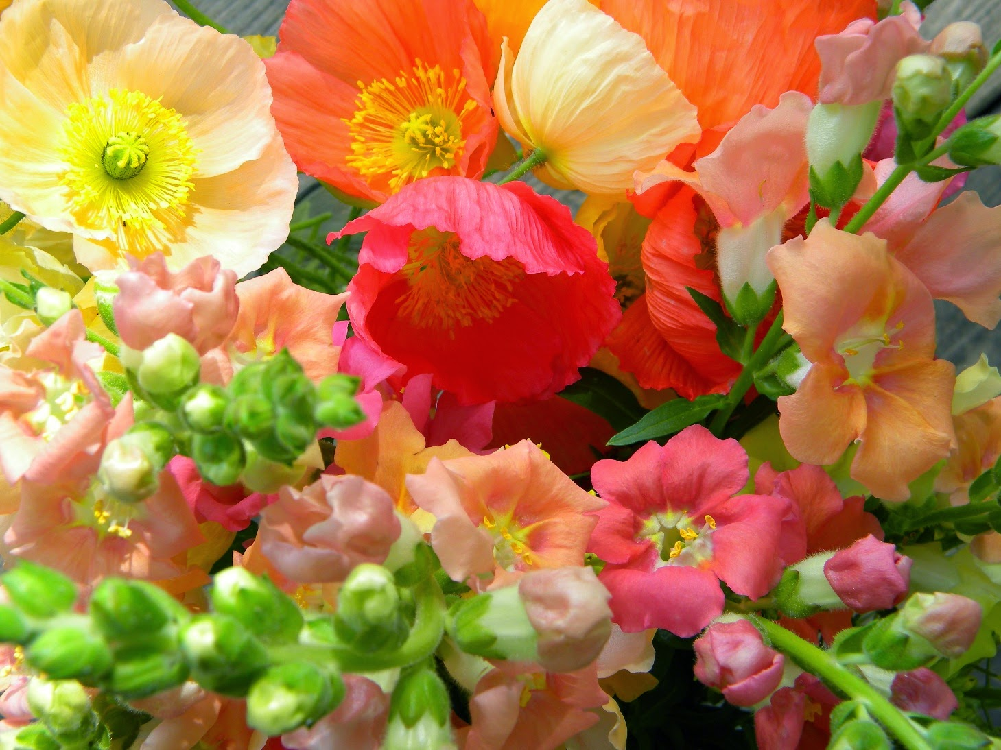 Wedding Flowers from Springwell: Peach and Coral Garden Roses and ...