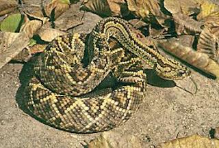 serpiente2