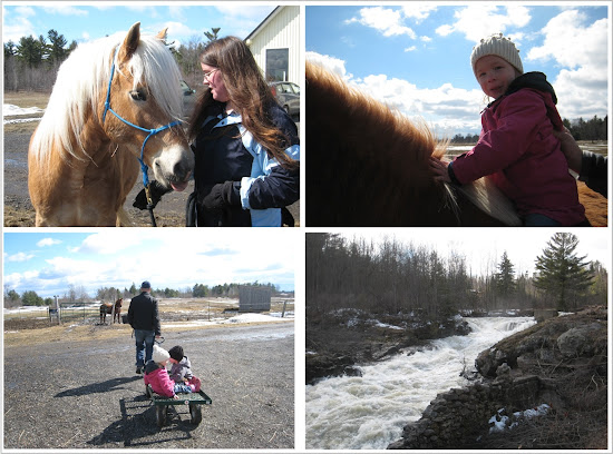 Horse Riding Collage
