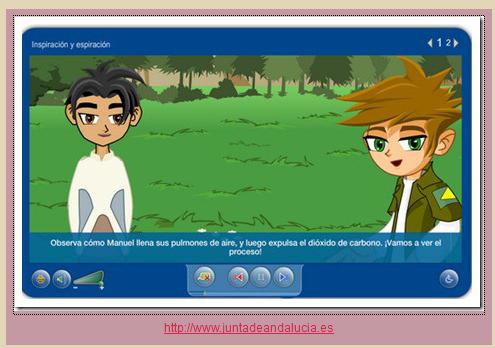 http://www.juntadeandalucia.es/averroes/carambolo/WEB%20JCLIC2/Agrega/Medio/El%20cuerpo%20humano/El%20aparato%20respiratorio/contenido/cm03_oa02_es/index.html