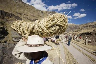 jerami padi,rumput pelik,jambatan agung babylon,villa jerami,villa jerami bali,villa jerami seminyak
