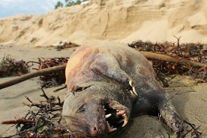 Mahluk Misterius Ditemukan di Pantai Santa Barbara