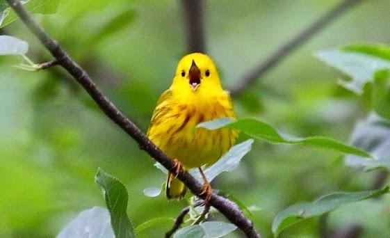 manfaat-burung-bagi-kesehatan