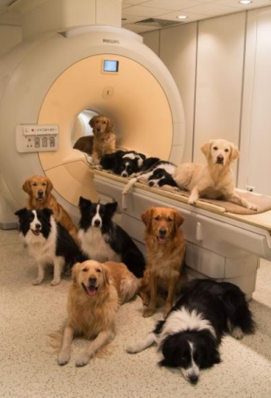 Using MRIs, scientists demonstrate that human and dog brains have dedicated voice areas