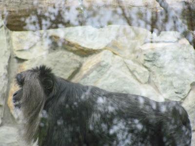 Превращение обезьяны в человека