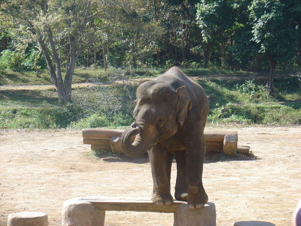 johann s blog der kleine elefant. Black Bedroom Furniture Sets. Home Design Ideas