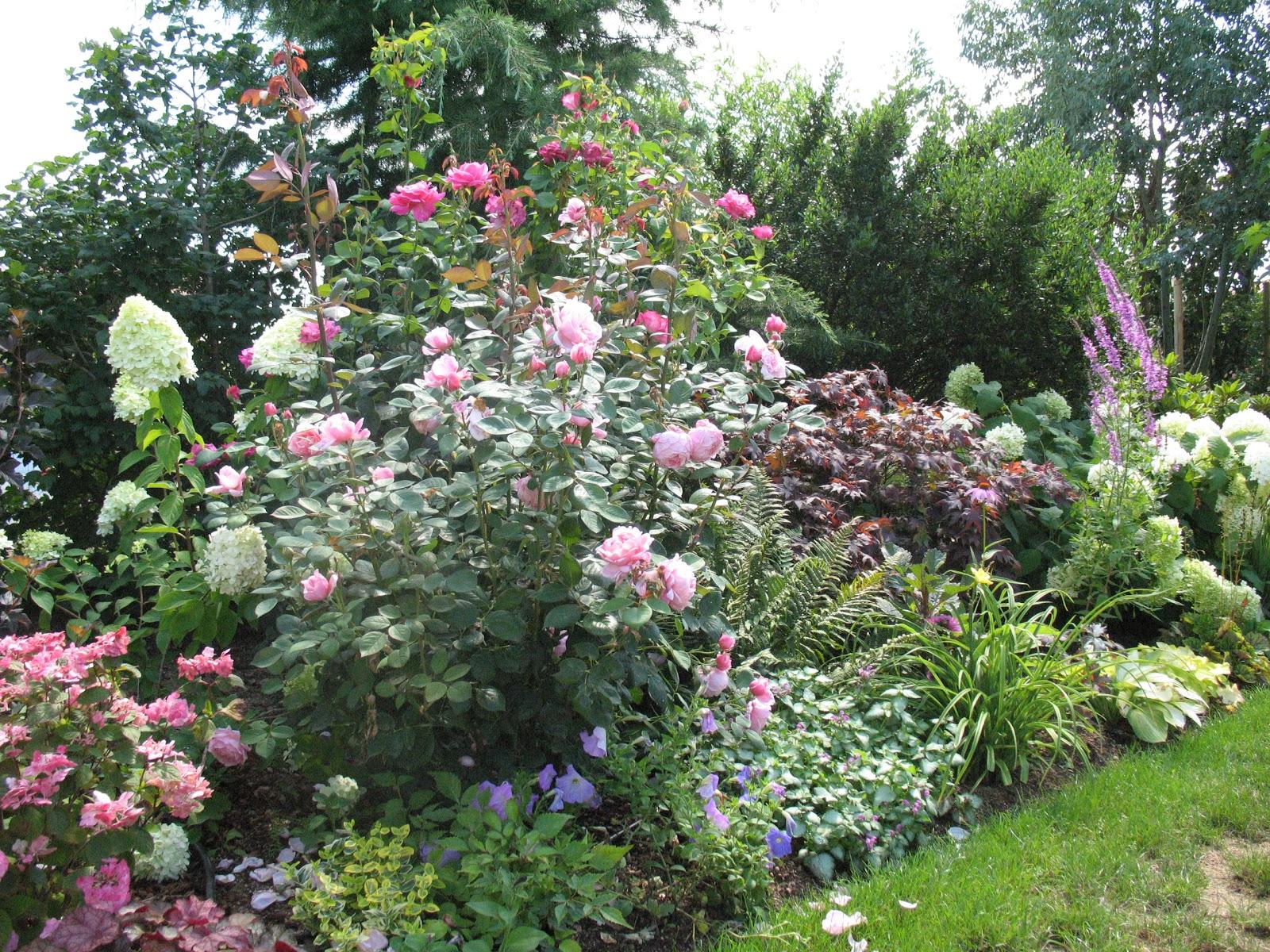 Roses du jardin Chêneland: Le jardin au cours de la belle saison