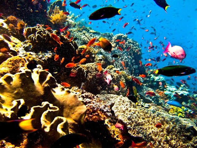 diving-di-bunaken