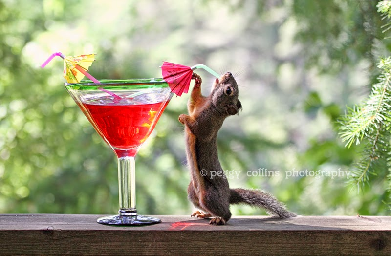 squirrels cocktails hallmark