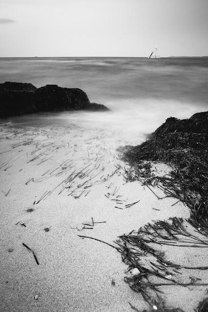 Meerespflanzen mit Strand und Meer in der Lübecker Bucht Landschaftsfotografie Andreas Blauth