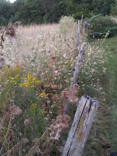 Fence post with wildflowers