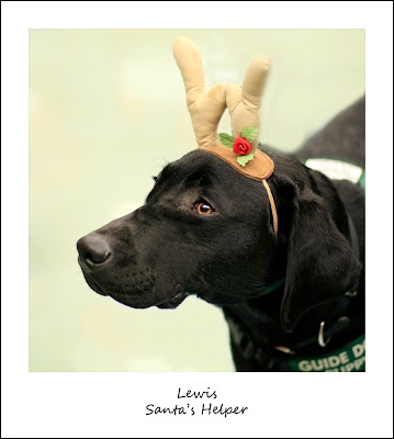 black Lab wearing antlers