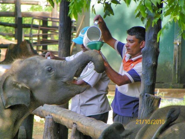 Elephant Transit Home en Udawalawe