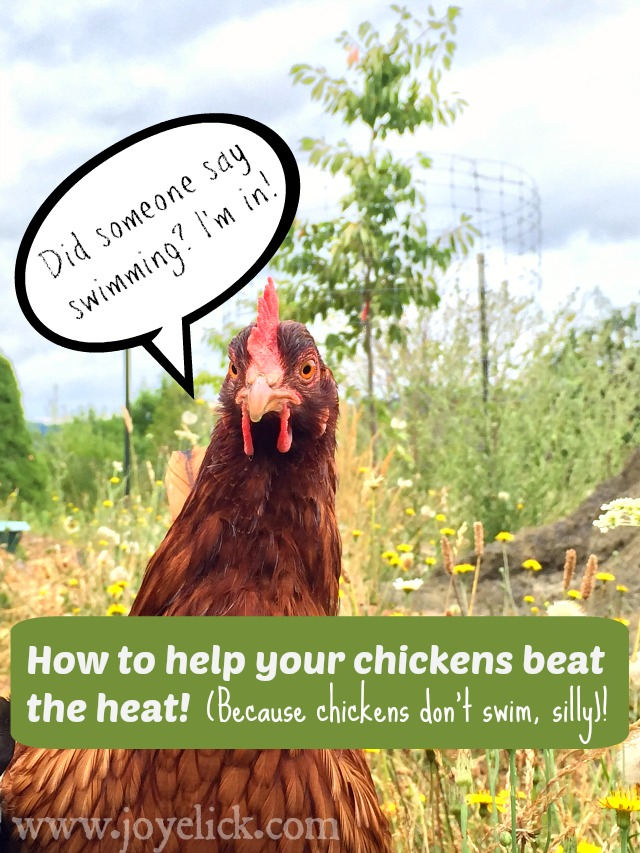 How to keep chickens cool in summer 39 s heat farm girl for Swimming chicken