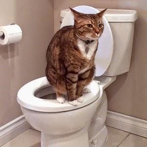 Hướng dẫn chó, mèo đi vệ sinh đúng nơi.