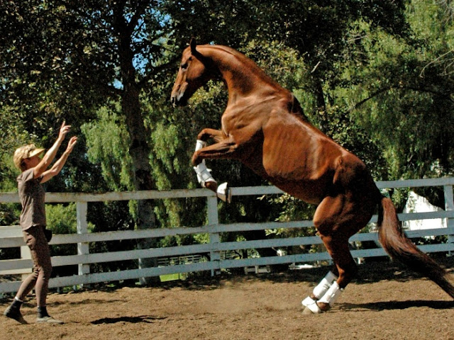 Lukas é o cavalo mais inteligente do mundo de acordo com o Guiness