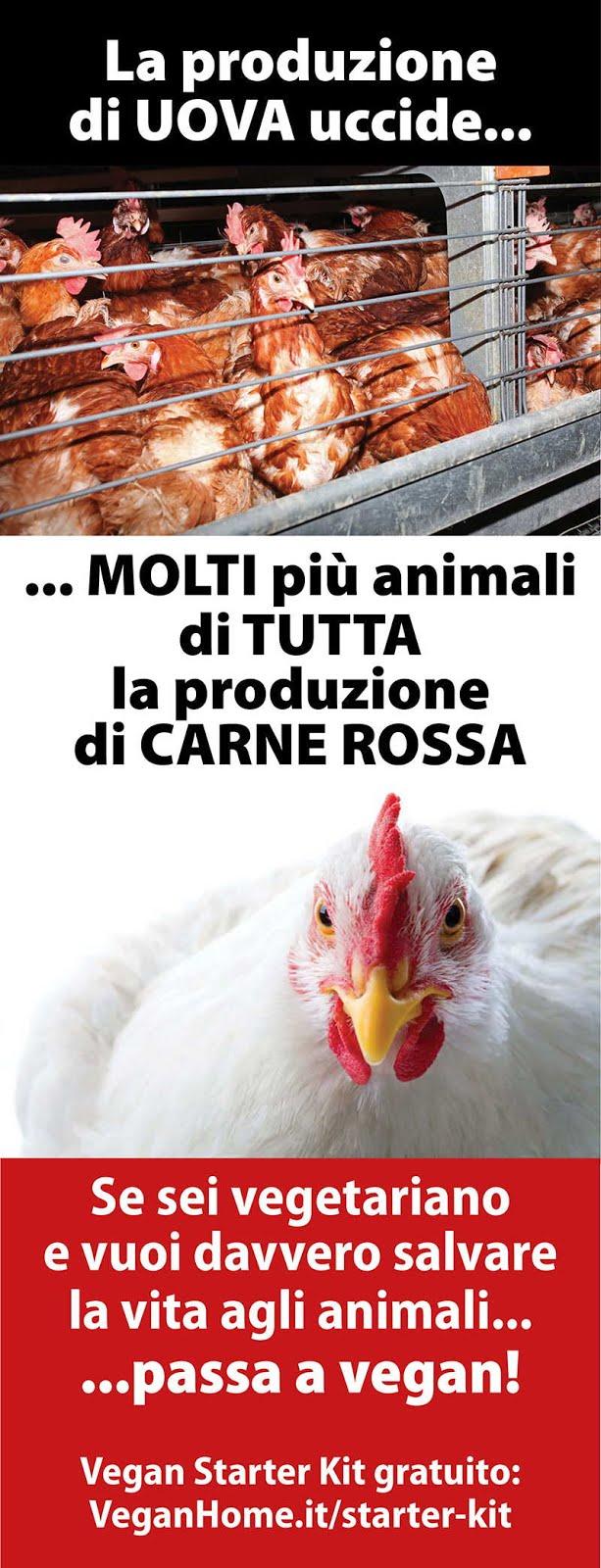 La produzione di UOVA uccide... MOLTI più animali di TUTTA la produzione di CARNE ROSSA.