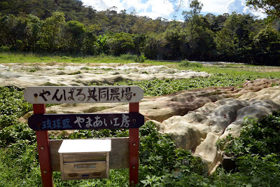 上山弘子の琉球藍