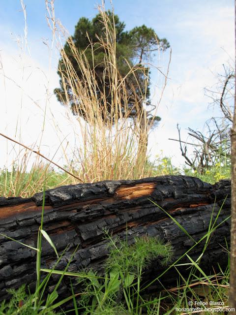 Restos del incendio de Collserola del pasado San Juan