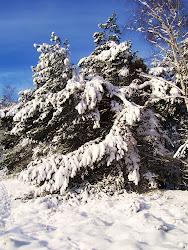 Sneeuw Coeveringse Heide