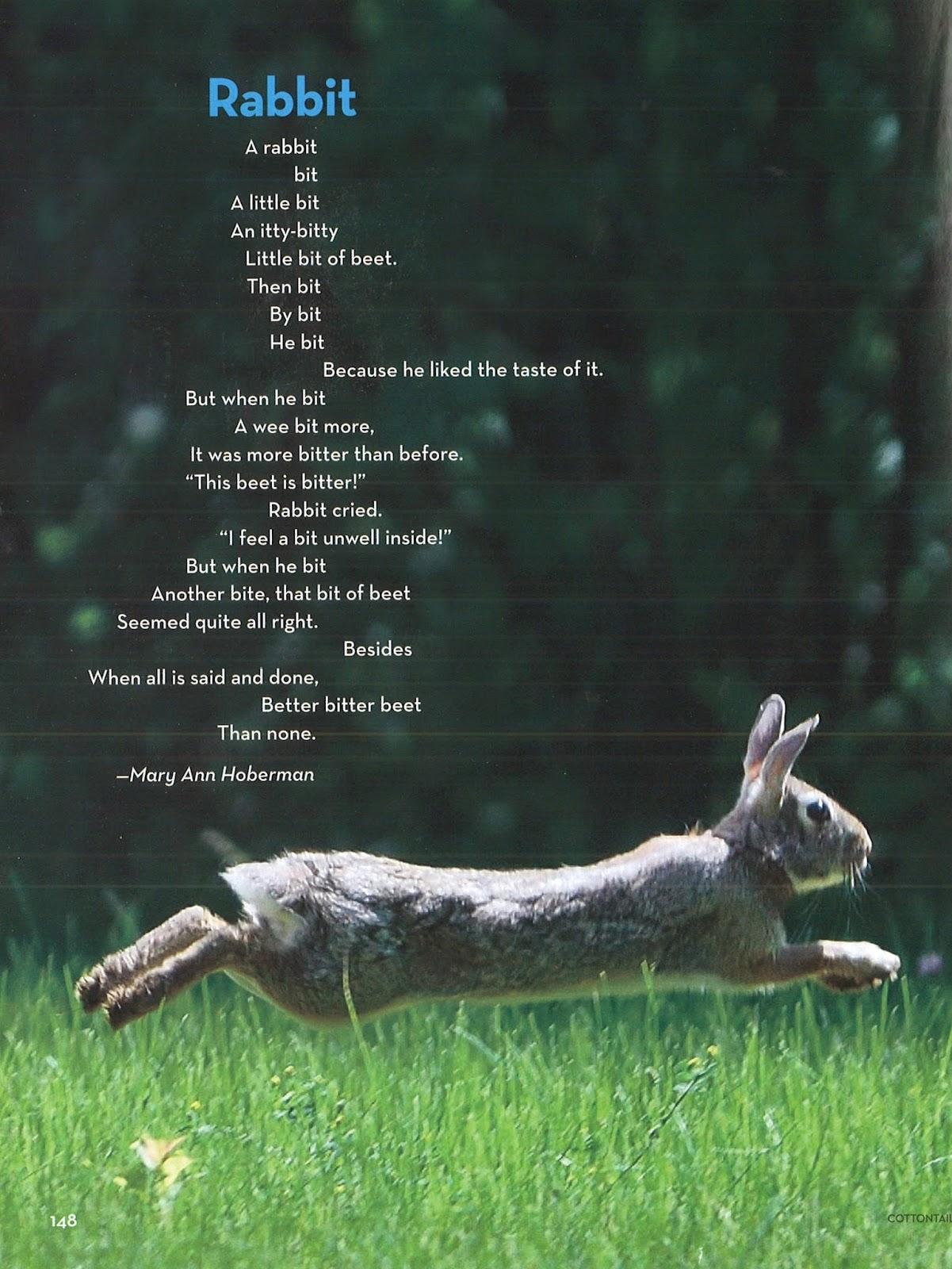 kurious kitty s kurio kabinet poetry friday bunnies