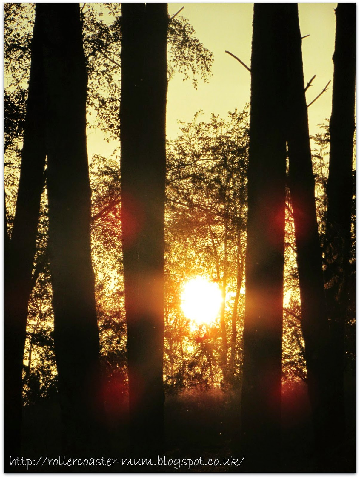 sunset from camp, RSPB #BigWildSleepout