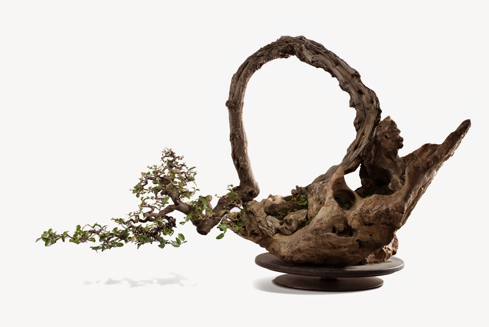Kee Hua Chee Live 39LIVING SCULPTURES39 AKA THE ART OF BONSAI FROM