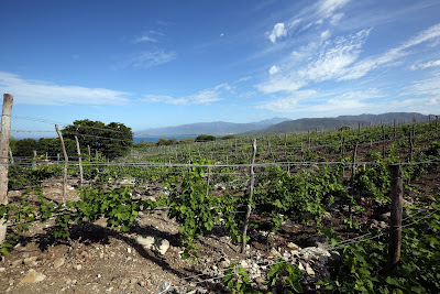 The Ocoa Bay Wine and Tourism Project