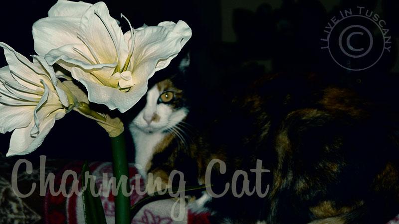 charming cat - affascinante creatura