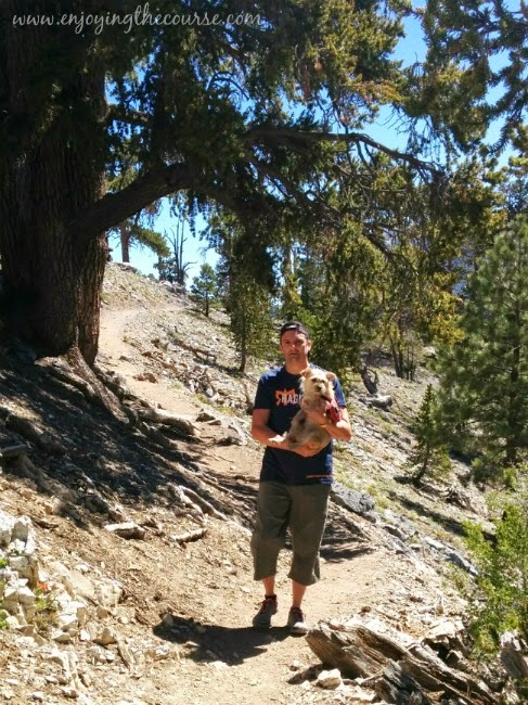 Hiking Bristlecone Loop, Spring Mountain National Recreation Area
