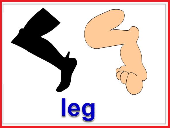 Kindergarten Worksheets: Parts of body Flashcards - Leg