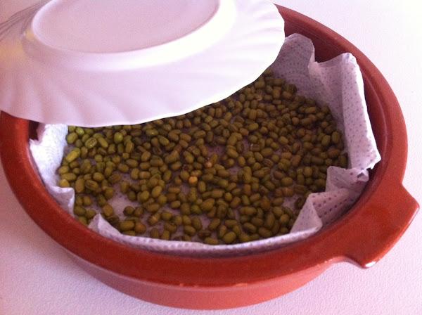 Cultivar Brotes de soja