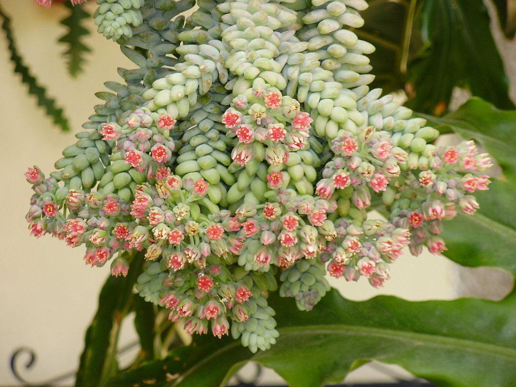 plantas de hojas perennes