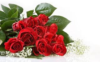 Hình nền hoa hồng đẹp và lãng mạn