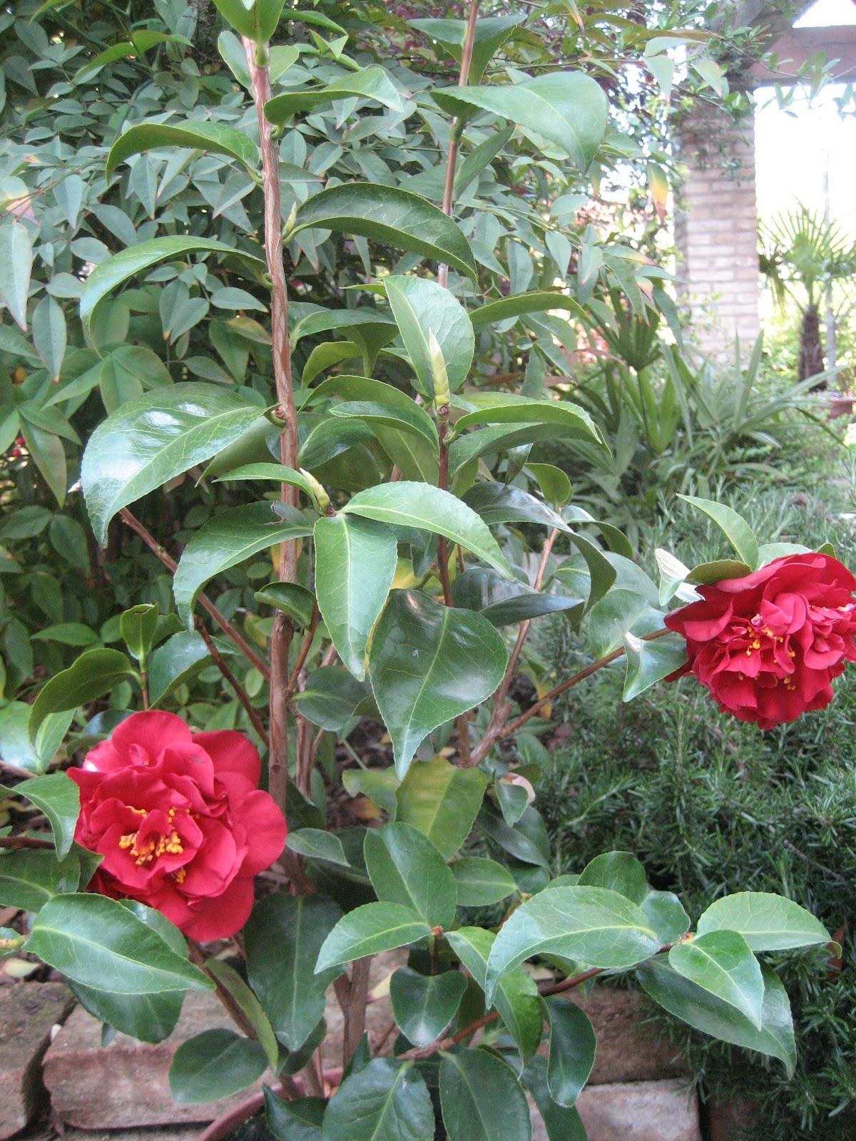Il bosco delle zucche - Sistemare il giardino ...