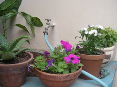 Potted untropical plants