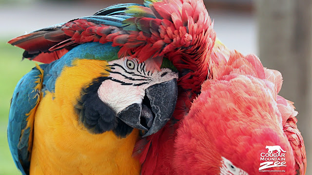 Macaws Bird Best Friends