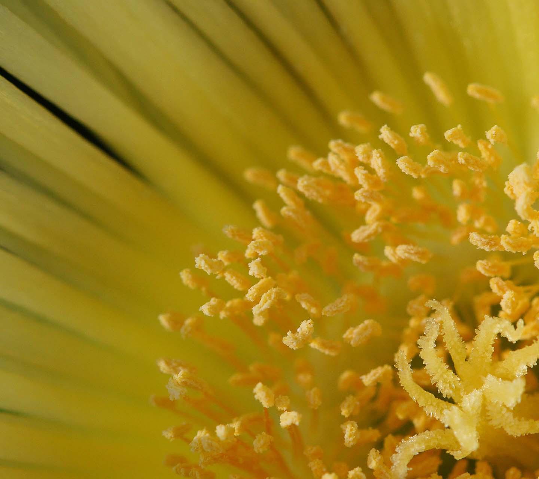 http://4.bp.blogspot.com/-l9Zvz4xDteE/UNrPsGov1eI/AAAAAAAAADo/lNjs6w3hLvY/s1600/yellow-flower-macro-wallpaper.jpg