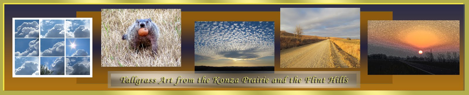 Konza Prairie Girl Color Pallette