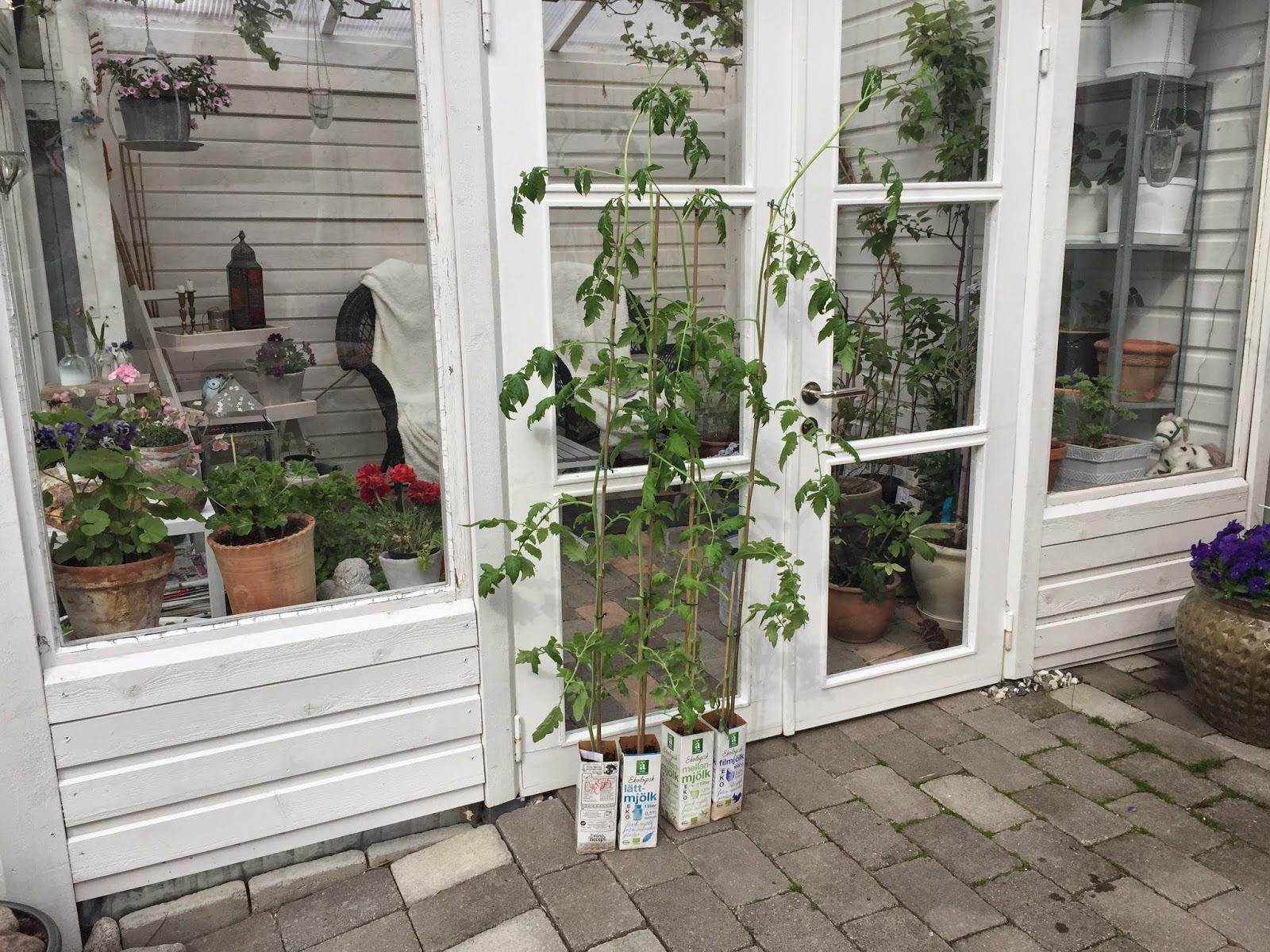 Växthus Odla : Karins hem amp trädgård odla bygg och inspireras