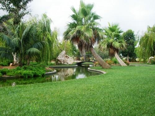 Cuidado de plantas page 33 - Jardin botanico valencia ...