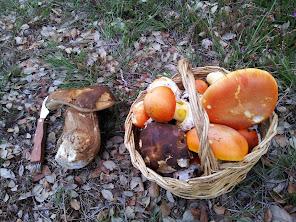 ¡Benvido Outono!