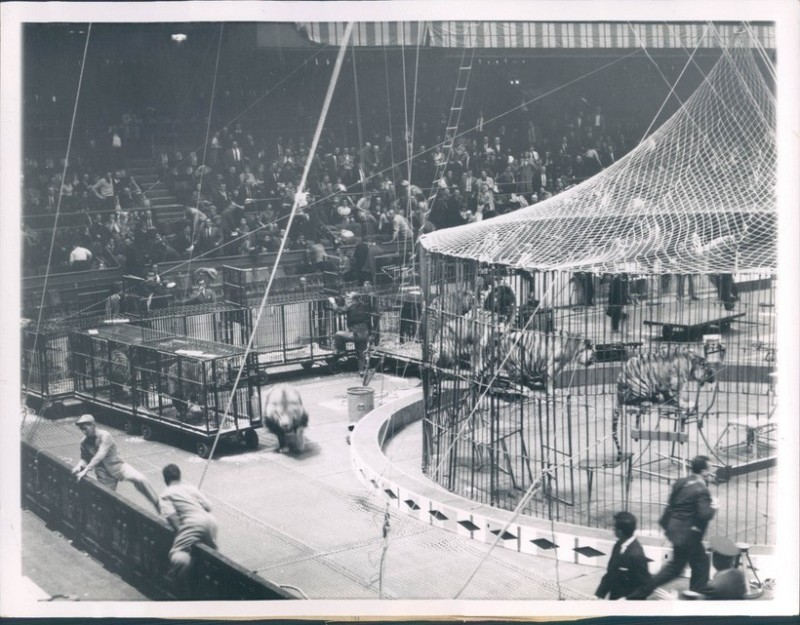 Circus Anonymous Lion Loose In Msg 1959