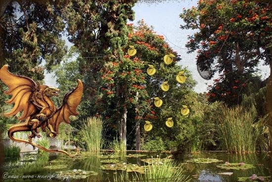 Der Garten Im Februar alles rund um teneriffa und casa der garten der hesperiden