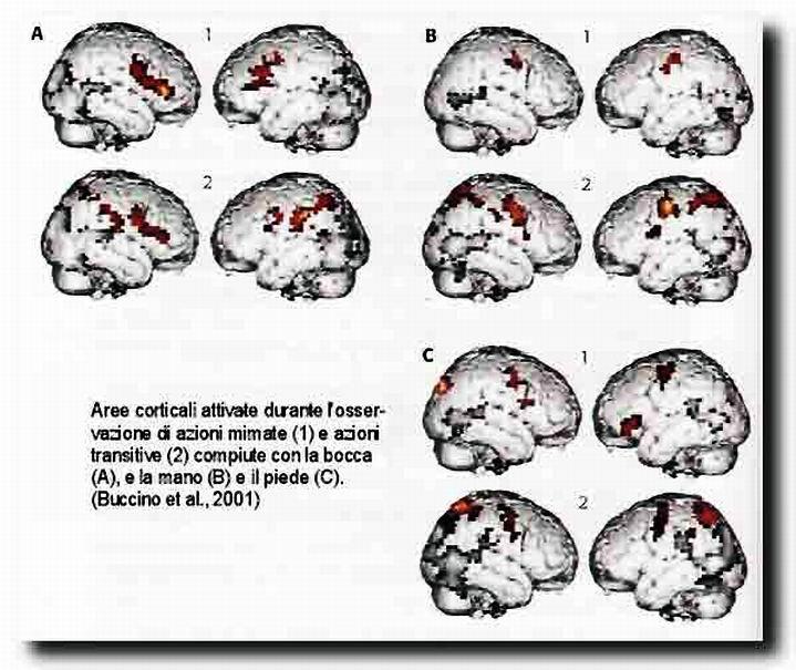 Nuova didattica neuroni specchio linguaggio e coscienza - I neuroni specchio ...