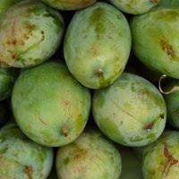 Manfaat Buah Mangga Untuk Kesehatan Usus gambar buah mangga yang bagus untuk kesehatan usus